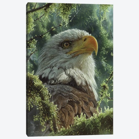 Bald Eagle - High And Mighty - Vertical Canvas Print #CBO157} by Collin Bogle Canvas Wall Art