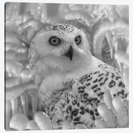 Snowy Owl Sanctuary - Square - Black & White Canvas Print #CBO158} by Collin Bogle Canvas Print