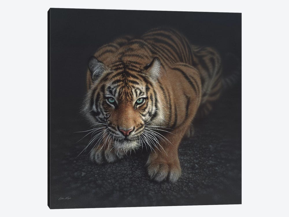 Crouching Tiger, Square by Collin Bogle 1-piece Art Print