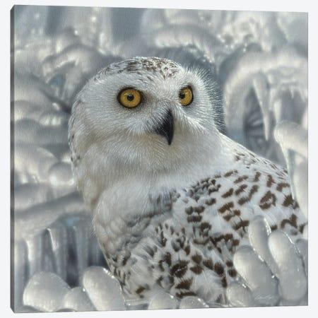 Snowy Owl Sanctuary Canvas Print #CBO161} by Collin Bogle Canvas Art