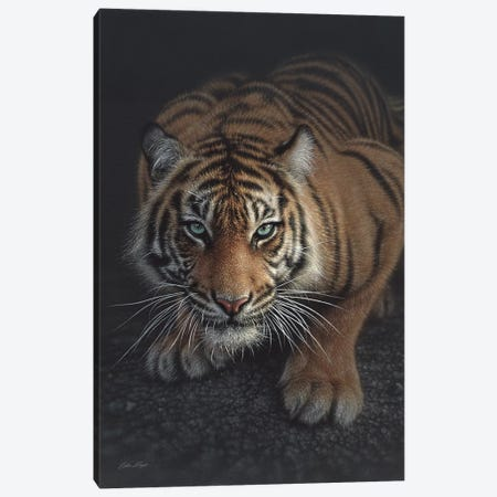Crouching Tiger, Vertical Canvas Print #CBO16} by Collin Bogle Canvas Art Print