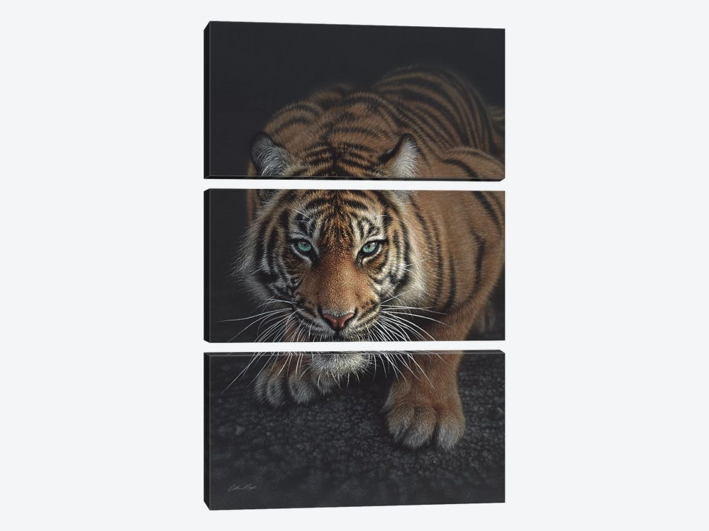 Crouching Tiger, Vertical by Collin Bogle 3-piece Canvas Artwork