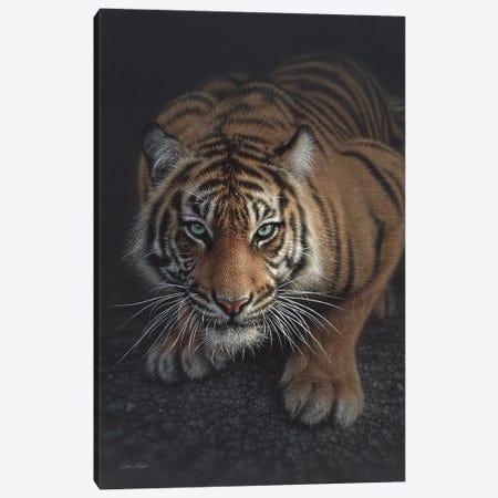 Crouching Tiger, Vertical Canvas Print #CBO16} by Collin Bogle Canvas Art Print