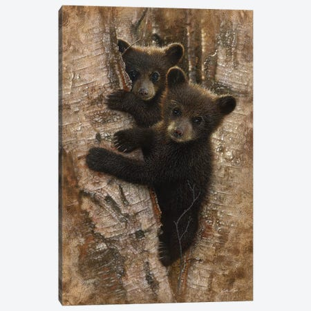 Curious Black Bear Cubs, Vertical Canvas Print #CBO19} by Collin Bogle Canvas Wall Art