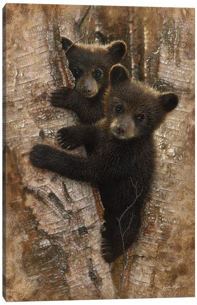 Curious Black Bear Cubs, Vertical Canvas Art Print