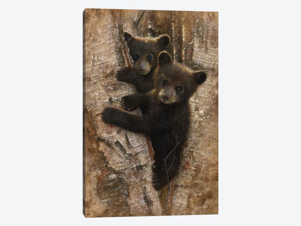 Curious Black Bear Cubs, Vertical by Collin Bogle 1-piece Canvas Print