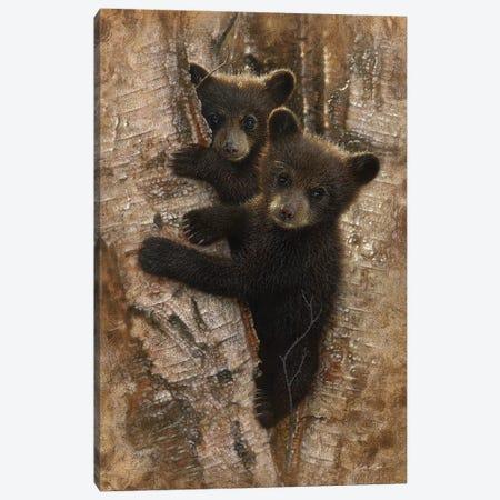 Curious Black Bear Cubs, Vertical Canvas Print #CBO19} by Collin Bogle Canvas Wall Art
