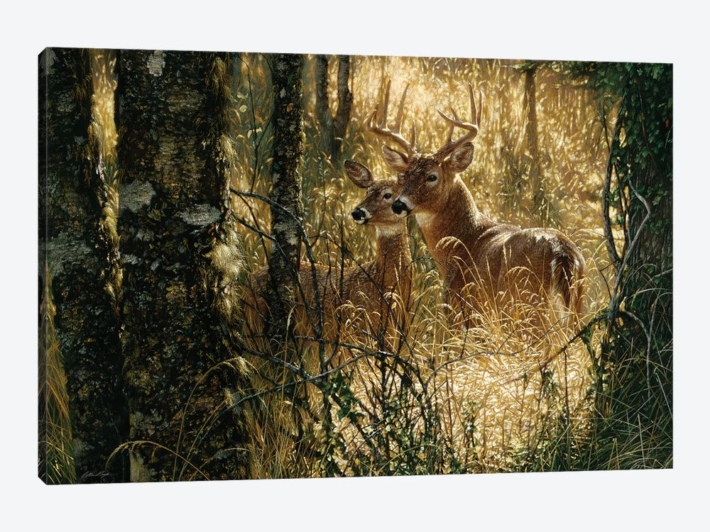 A Golden Moment - Whitetail Deer, Horizontal by Collin Bogle 1-piece Canvas Wall Art