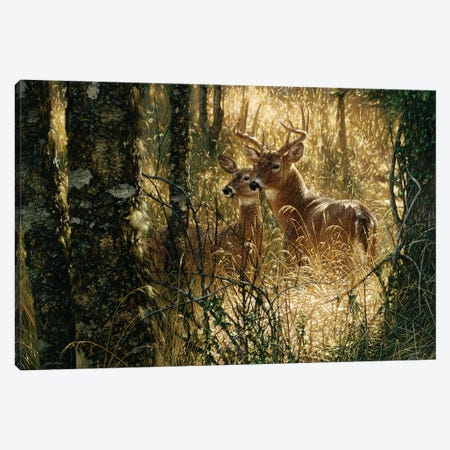A Golden Moment - Whitetail Deer, Horizontal 3-Piece Canvas #CBO1} by Collin Bogle Canvas Artwork