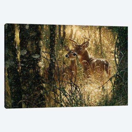 A Golden Moment - Whitetail Deer, Horizontal Canvas Print #CBO1} by Collin Bogle Canvas Artwork