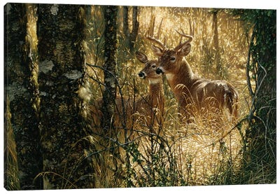 A Golden Moment - Whitetail Deer, Horizontal Canvas Art Print