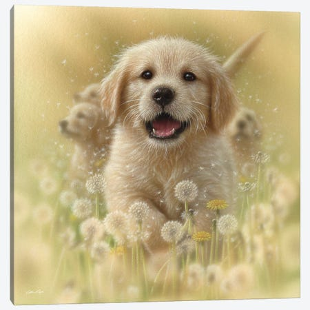 Dandelions - Golden Retriever, Square Canvas Print #CBO20} by Collin Bogle Canvas Art Print