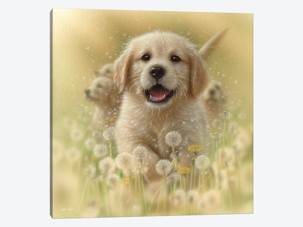 Dandelions - Golden Retriever, Square by Collin Bogle 1-piece Canvas Art Print