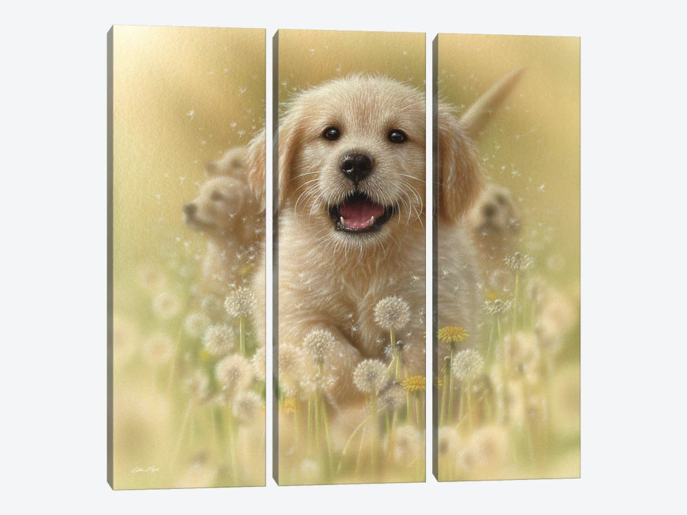 Dandelions - Golden Retriever, Square by Collin Bogle 3-piece Art Print