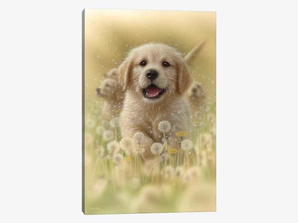 Dandelions - Golden Retriever, Vertical by Collin Bogle 1-piece Canvas Artwork