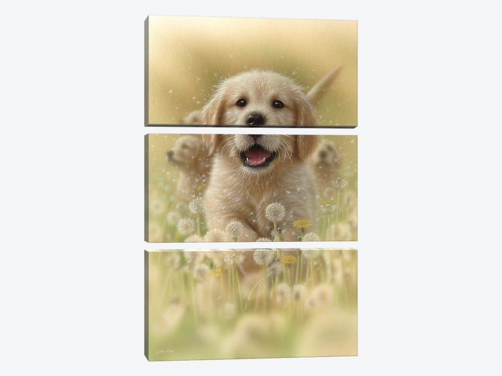 Dandelions - Golden Retriever, Vertical by Collin Bogle 3-piece Canvas Wall Art