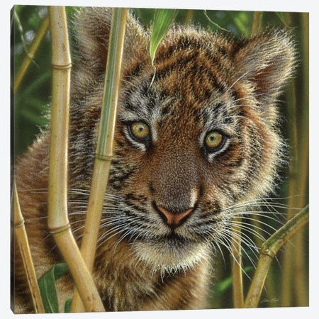 Tiger Cub Discovery, Square Canvas Print #CBO22} by Collin Bogle Canvas Art Print