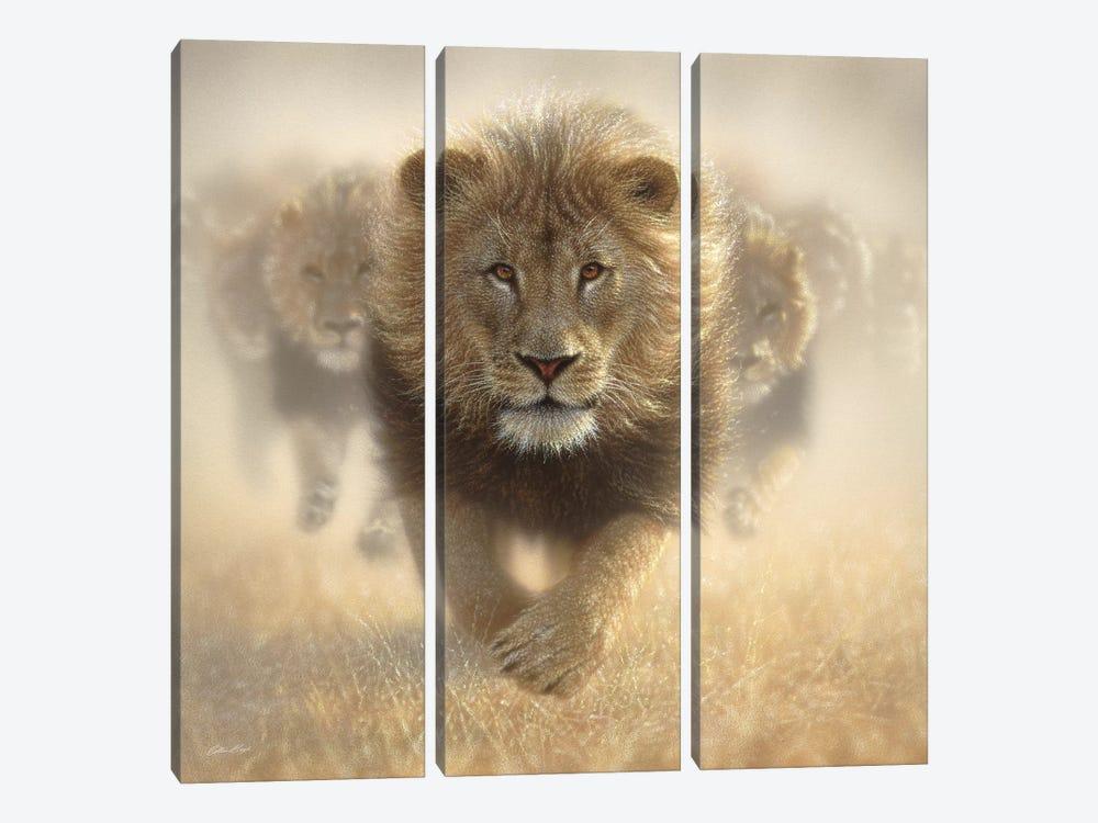 Eat My Dust - Lion, Square by Collin Bogle 3-piece Canvas Artwork