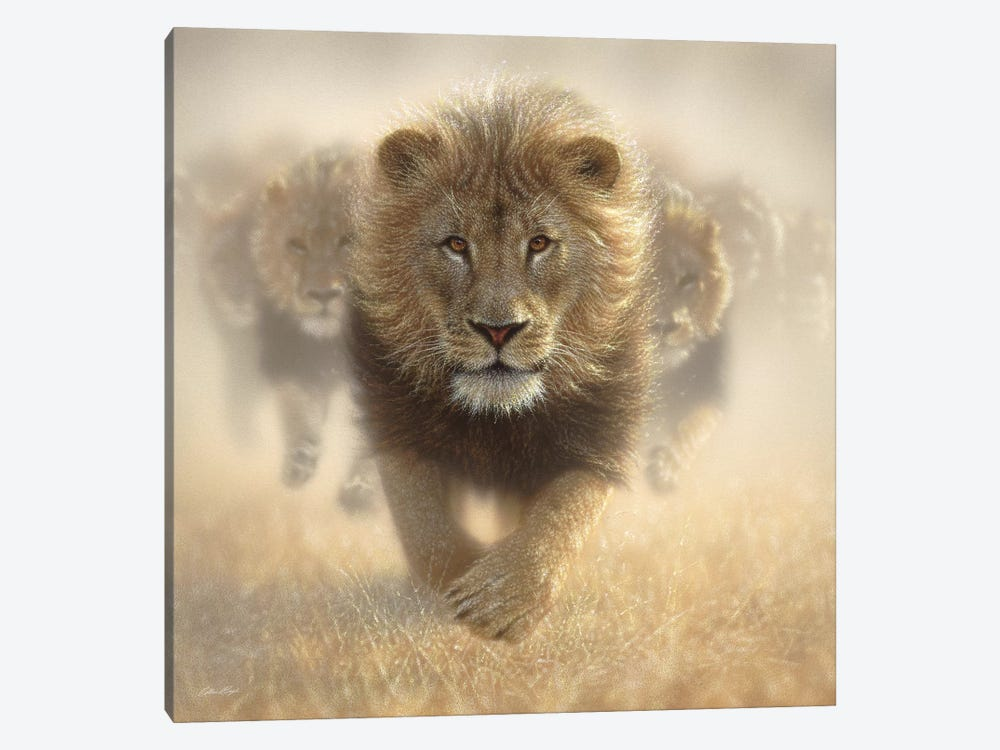 Eat My Dust - Lion, Square by Collin Bogle 1-piece Canvas Wall Art