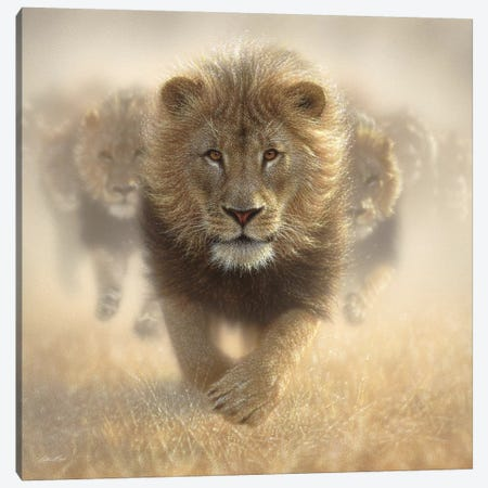 Eat My Dust - Lion, Square 3-Piece Canvas #CBO23} by Collin Bogle Canvas Art Print