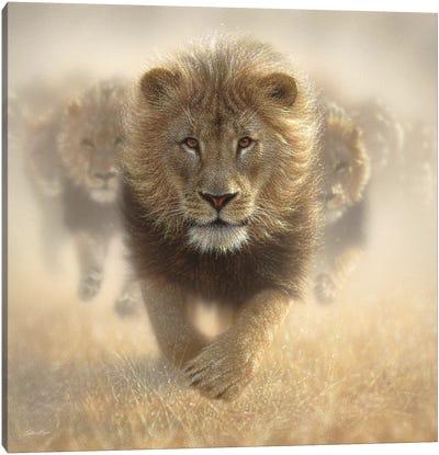 Eat My Dust - Lion, Square Canvas Art Print