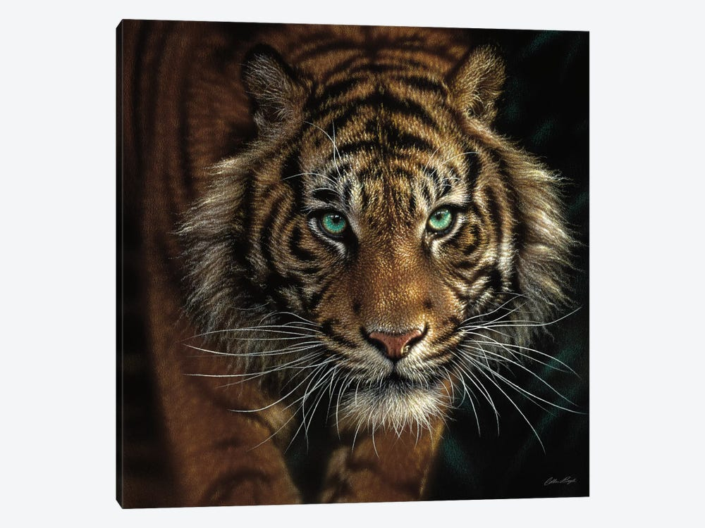 Eye Of The Tiger, Square by Collin Bogle 1-piece Canvas Wall Art