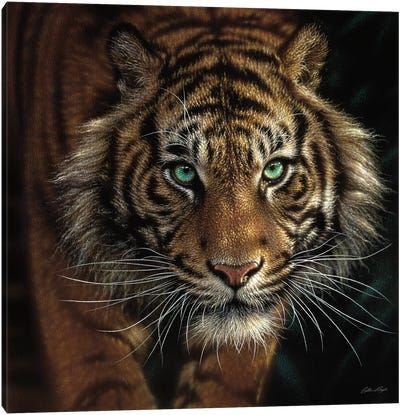 Eye Of The Tiger, Square Canvas Art Print