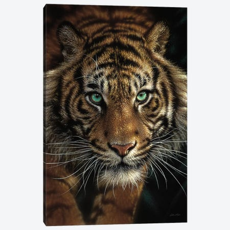 Eye Of The Tiger, Vertical Canvas Print #CBO26} by Collin Bogle Canvas Wall Art