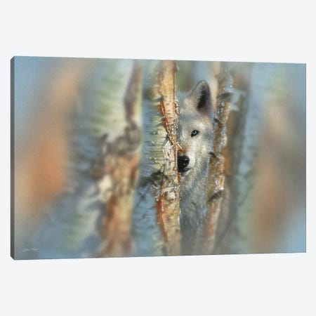 Focused - White Wolf, Horizontal Canvas Print #CBO28} by Collin Bogle Art Print