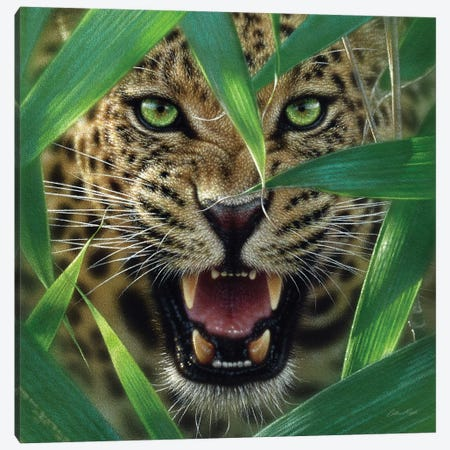Jaguar Ambush, Square Canvas Print #CBO2} by Collin Bogle Canvas Artwork