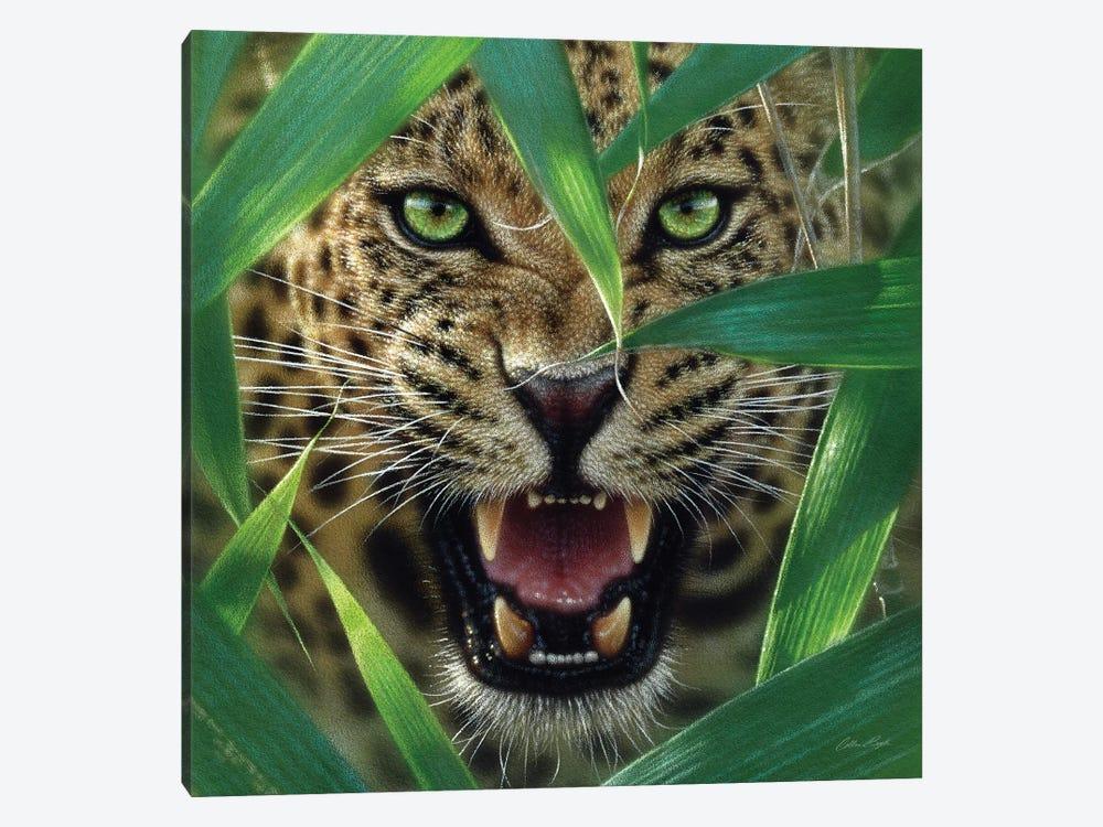 Jaguar Ambush, Square by Collin Bogle 1-piece Canvas Print
