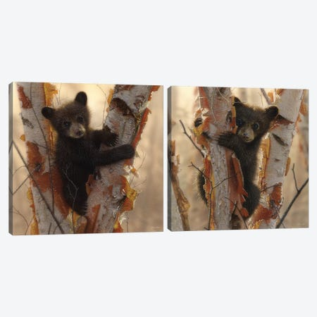 Curious Cub Diptych Canvas Print Set #CBO2HSET001} by Collin Bogle Canvas Artwork