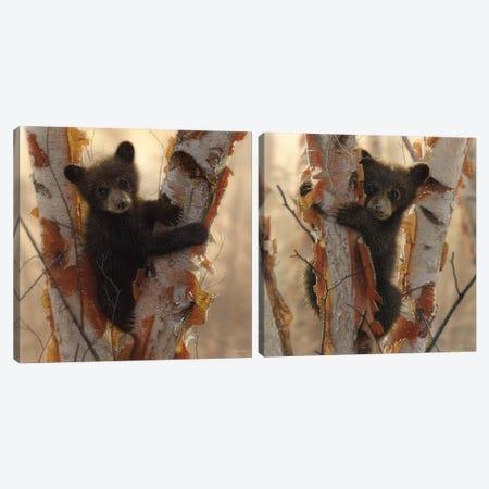 Curious Cub Diptych Canvas Print Set #CBO2HSET001} by Collin Bogle Canvas Artwork