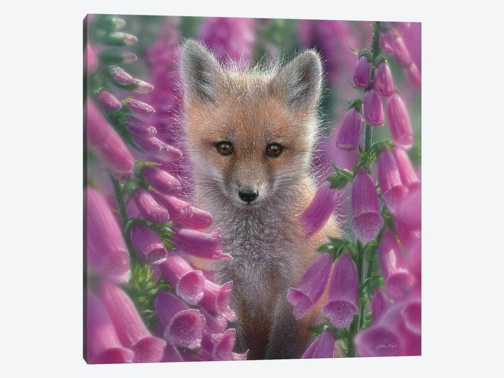 Foxgloves - Red Fox, Square by Collin Bogle 1-piece Canvas Art