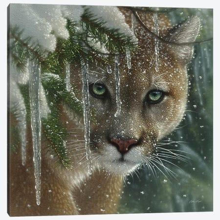 Frozen Cougar, Square Canvas Print #CBO32} by Collin Bogle Canvas Artwork