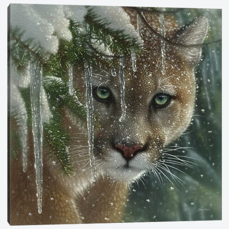Frozen Cougar, Square 3-Piece Canvas #CBO32} by Collin Bogle Canvas Artwork