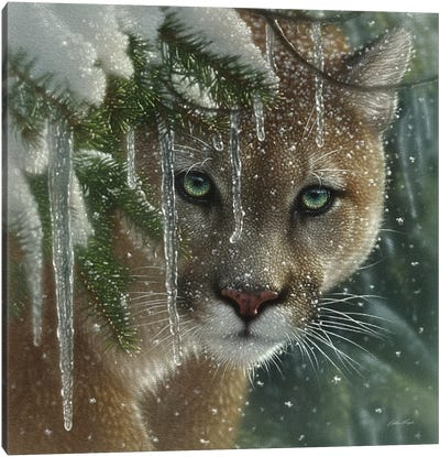 Frozen Cougar, Square Canvas Art Print