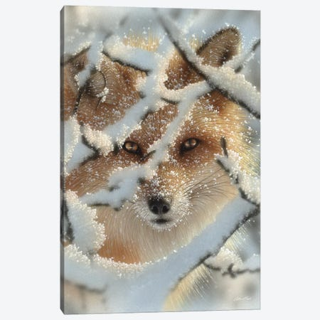 Hide And Seek - Red Fox, Vertical Canvas Print #CBO35} by Collin Bogle Canvas Print