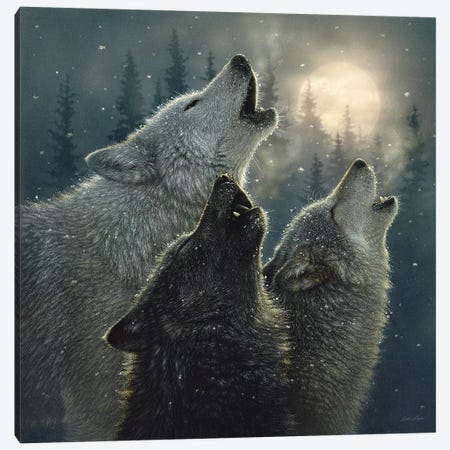 Howling Wolves In Harmony, Square Canvas Print #CBO38} by Collin Bogle Canvas Wall Art