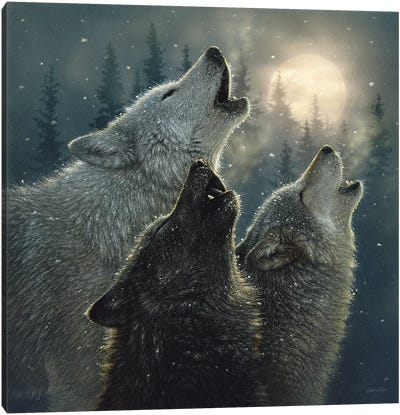 Howling Wolves In Harmony, Square Canvas Art Print