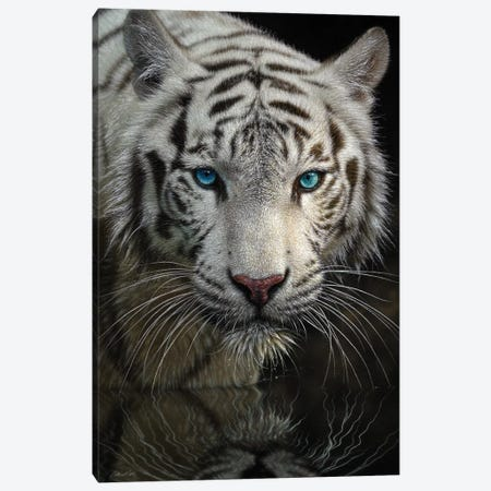 Into The Light - White Tiger, Vertical Canvas Print #CBO39} by Collin Bogle Canvas Wall Art