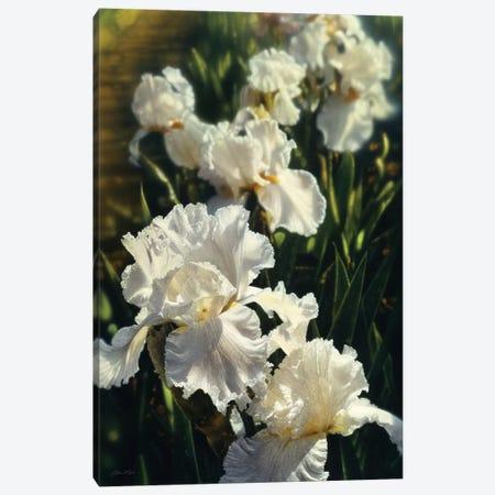 Iris Garden, Vertical Canvas Print #CBO40} by Collin Bogle Canvas Print