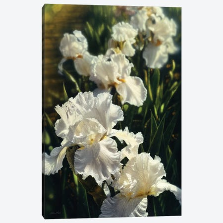 Iris Garden, Vertical 3-Piece Canvas #CBO40} by Collin Bogle Canvas Print