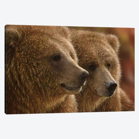 Lazy Daze - Brown Bears, Horizontal Canvas Print #CBO41} by Collin Bogle Canvas Art Print
