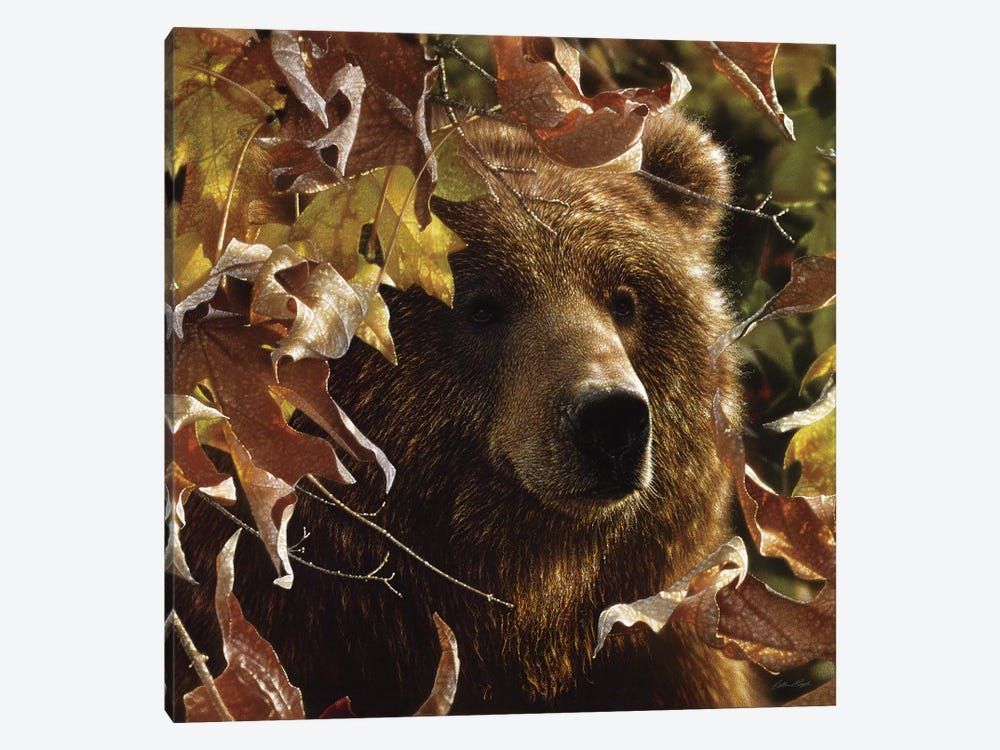 Legend Of The Fall - Brown Bear, Square by Collin Bogle 1-piece Canvas Art Print
