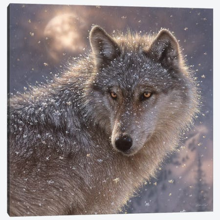 Lone Wolf, Square Canvas Print #CBO43} by Collin Bogle Canvas Print