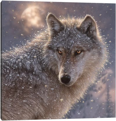 Lone Wolf, Square Canvas Art Print