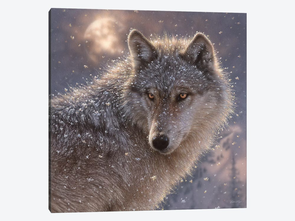 Lone Wolf, Square by Collin Bogle 1-piece Canvas Wall Art
