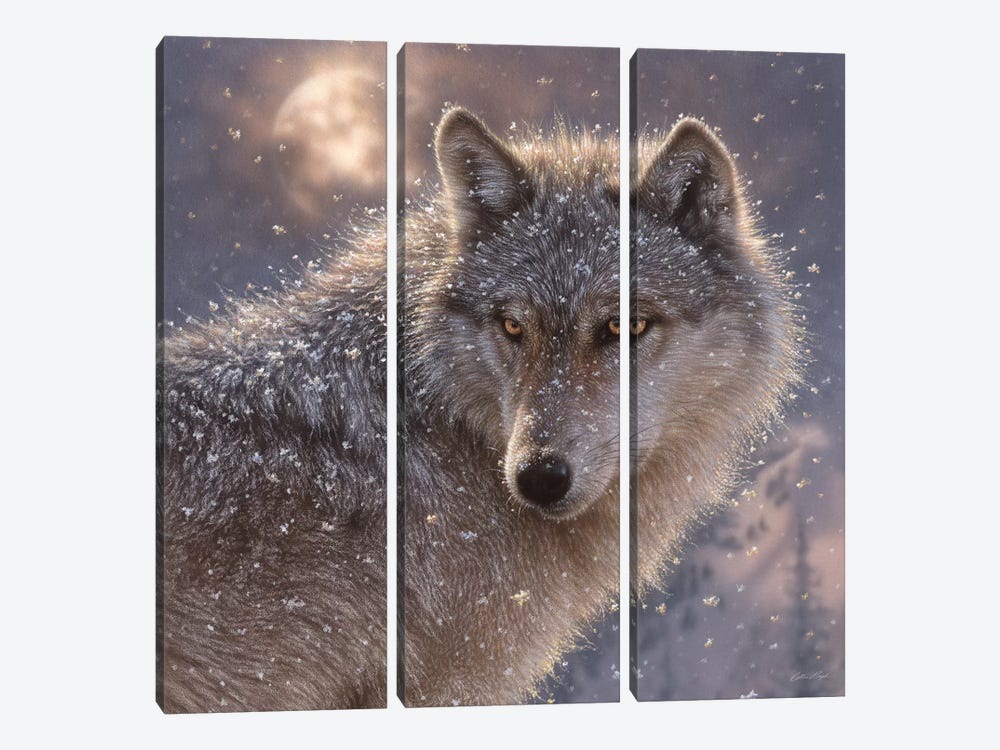 Lone Wolf, Square by Collin Bogle 3-piece Canvas Art