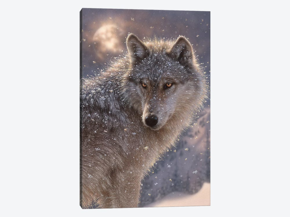 Lone Wolf, Vertical by Collin Bogle 1-piece Canvas Art Print